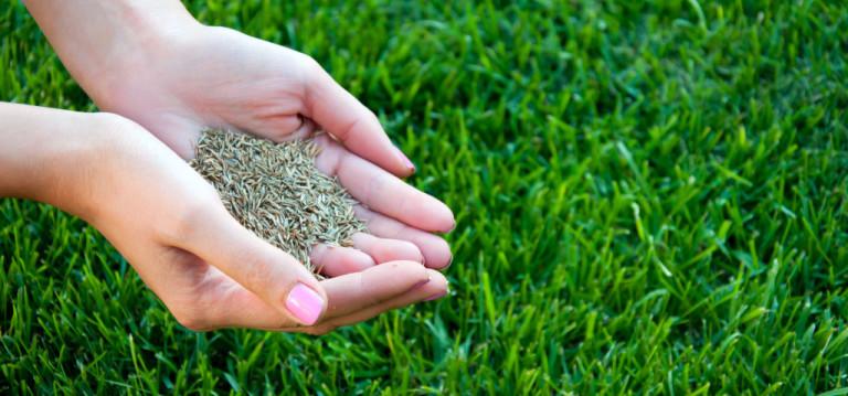 посев газонной травы в июне правильно шпаклевать стены